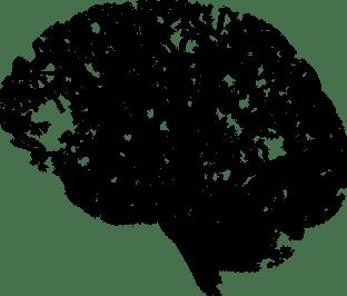 brain-2146817__340.png
